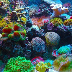Conoce y protege la magia del océano
